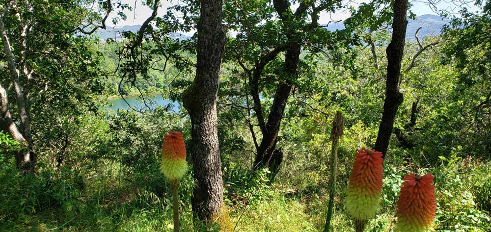 eagle-scout-trail-at-howarth-park-santa-rosa-sonoma-county-california