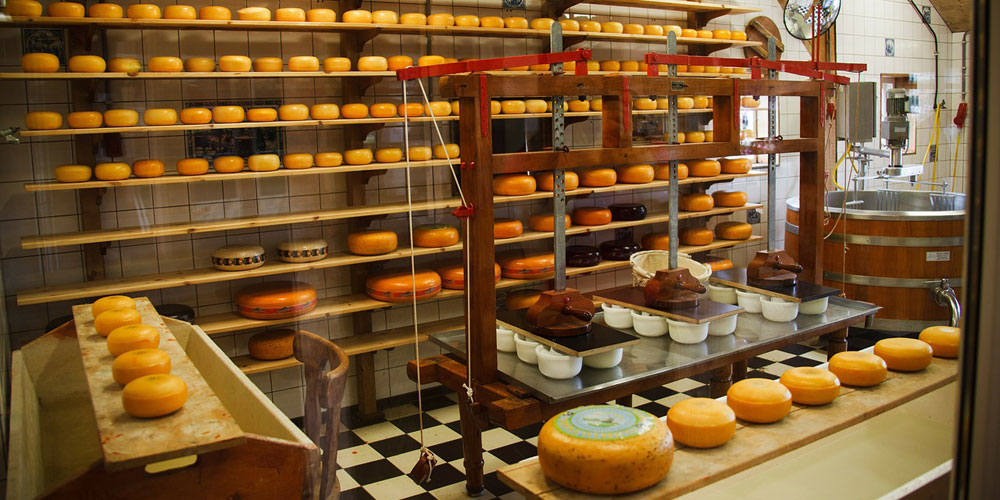 how-cheese-is-made-in-sonoma-county-california