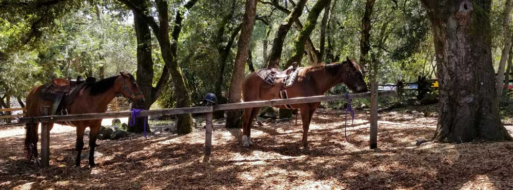 ride-horses-at-howarth-park-santa-rosa-sonoma-county-california