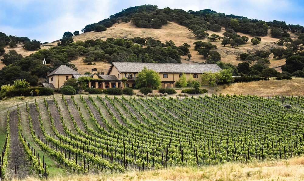 Vineyard in Sonoma and Napa