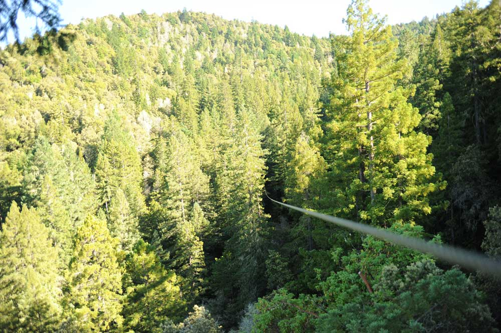 zip-line-canopy-tour-northern-california-sonoma-county